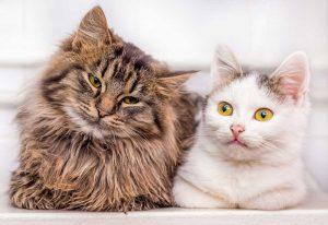 כשחתול רחוב פוגש חתול בית