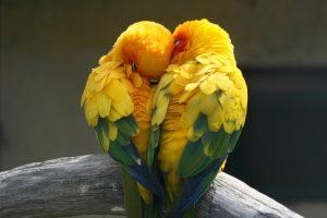 סדנה לשדרוג הזוגיות