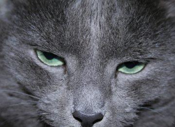 זוגיות – כשחתול רחוב וחתול בית נפגשים